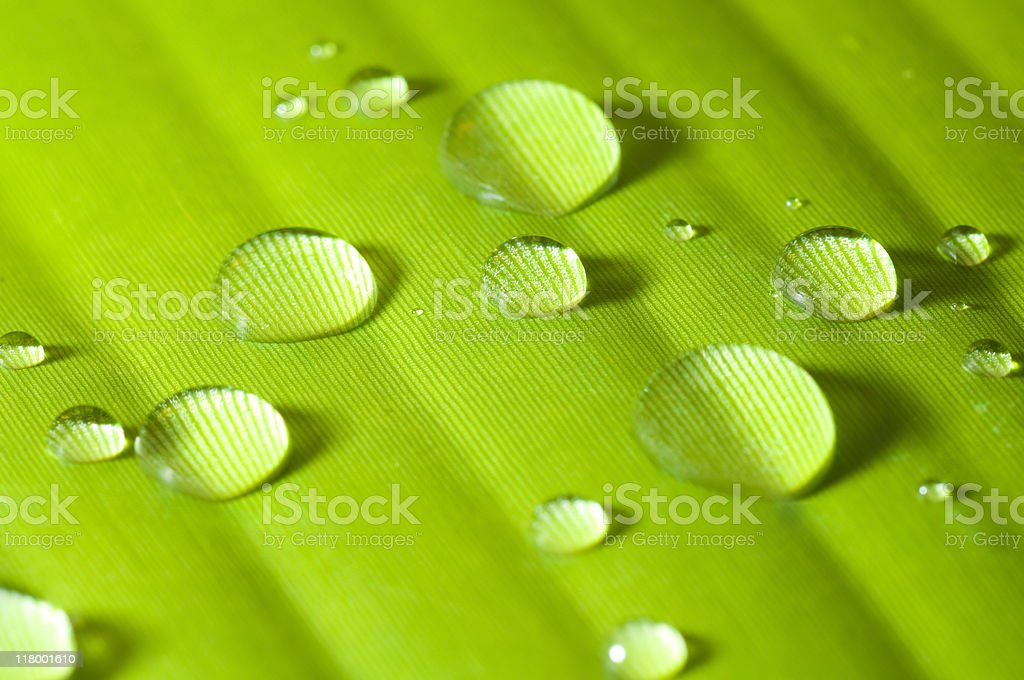 Green leaf with water drop royalty-free stock photo