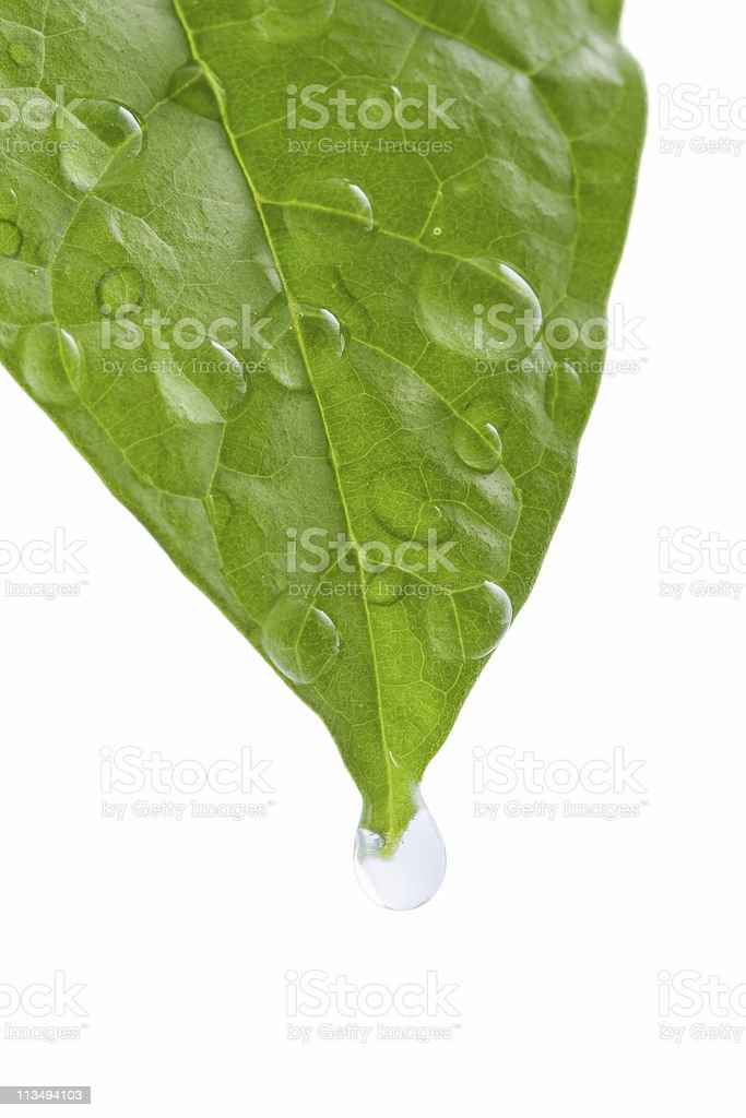 green leaf with water drops stock photo