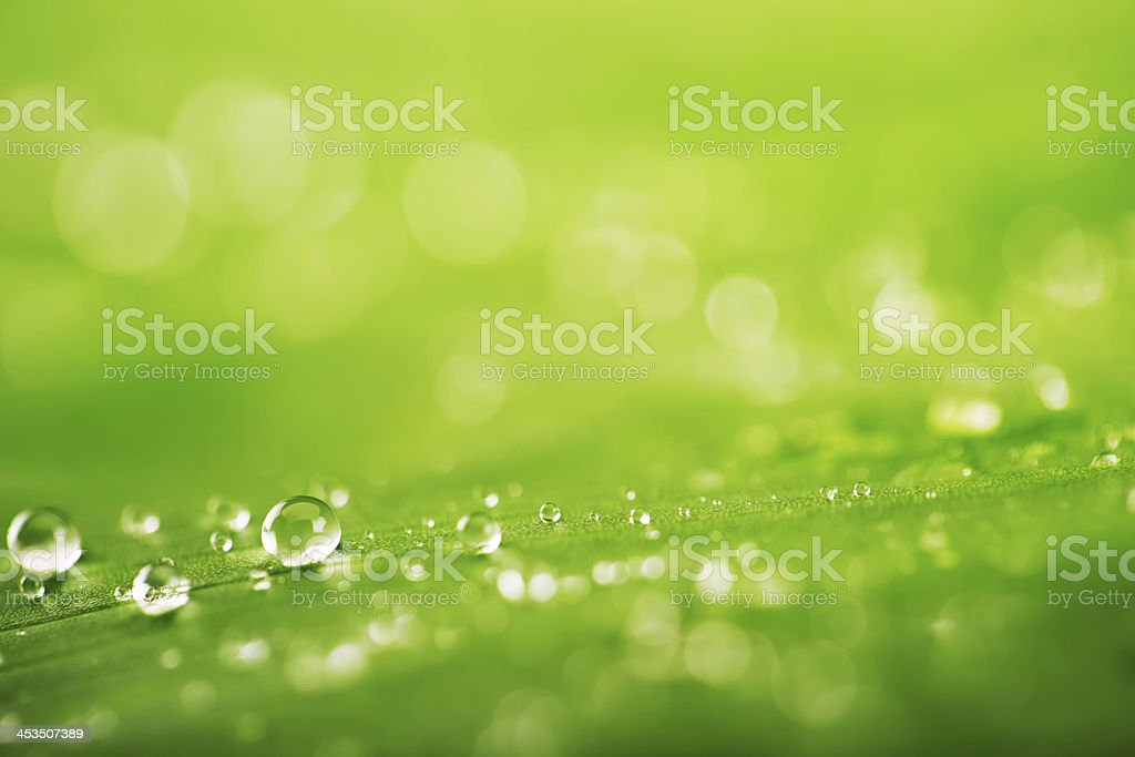 Green leaf with water drops royalty-free stock photo
