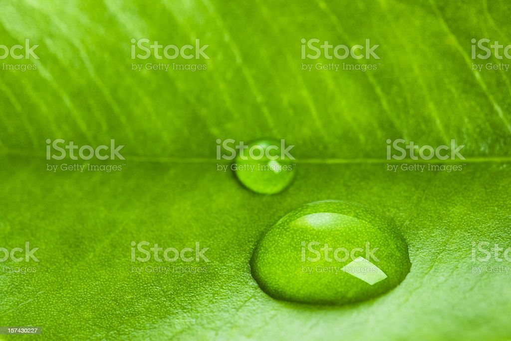 Green leaf with water macro royalty-free stock photo