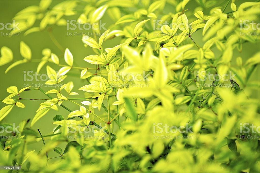 Green Leafes Background royalty-free stock photo