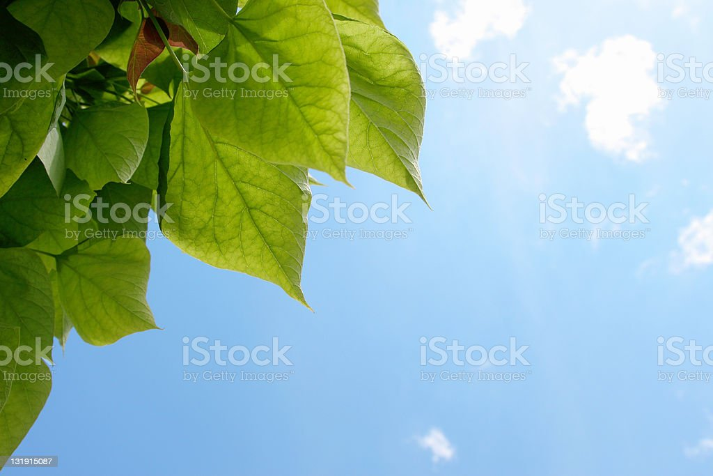 Green leafs and blue sky frame stock photo