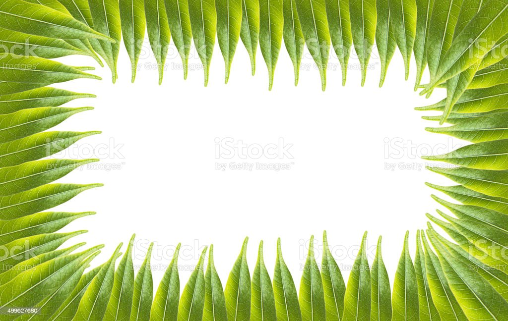 Green leafs background with white blank center stock photo