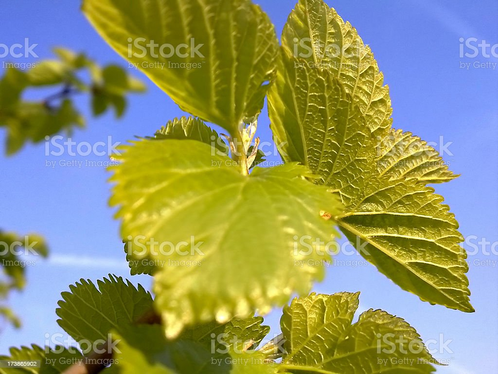 Green leafs over blue sky stock photo