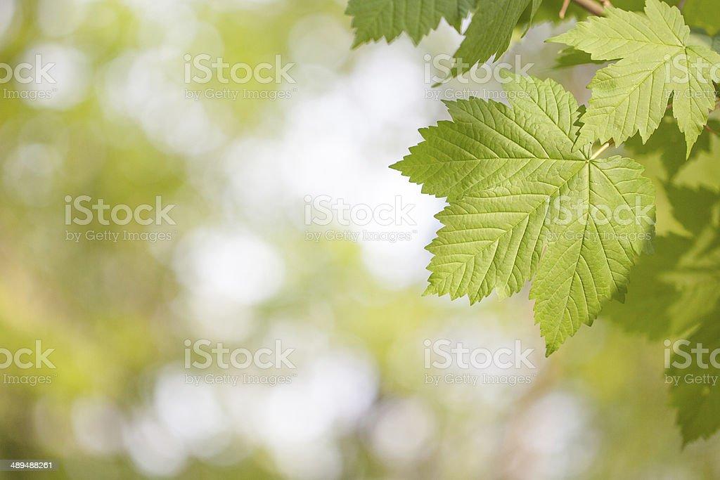 Verde leafs foto de stock libre de derechos
