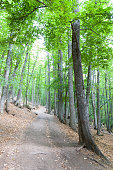 green leafy chestnut trees in summer composition