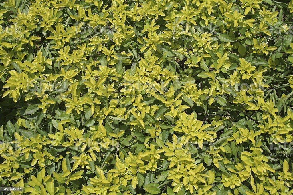 Green Leafy Pattern stock photo