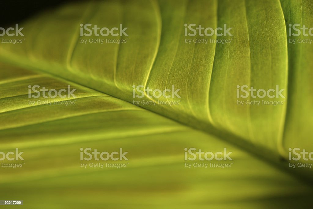 Green Leafy stock photo