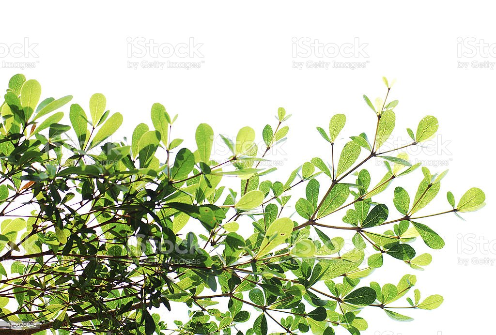 Green leave background texture royalty-free stock photo