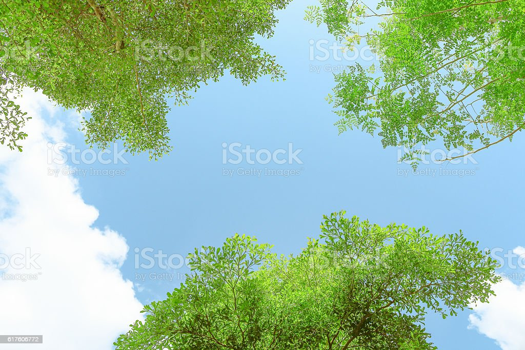 green leaves against blue sky stock photo