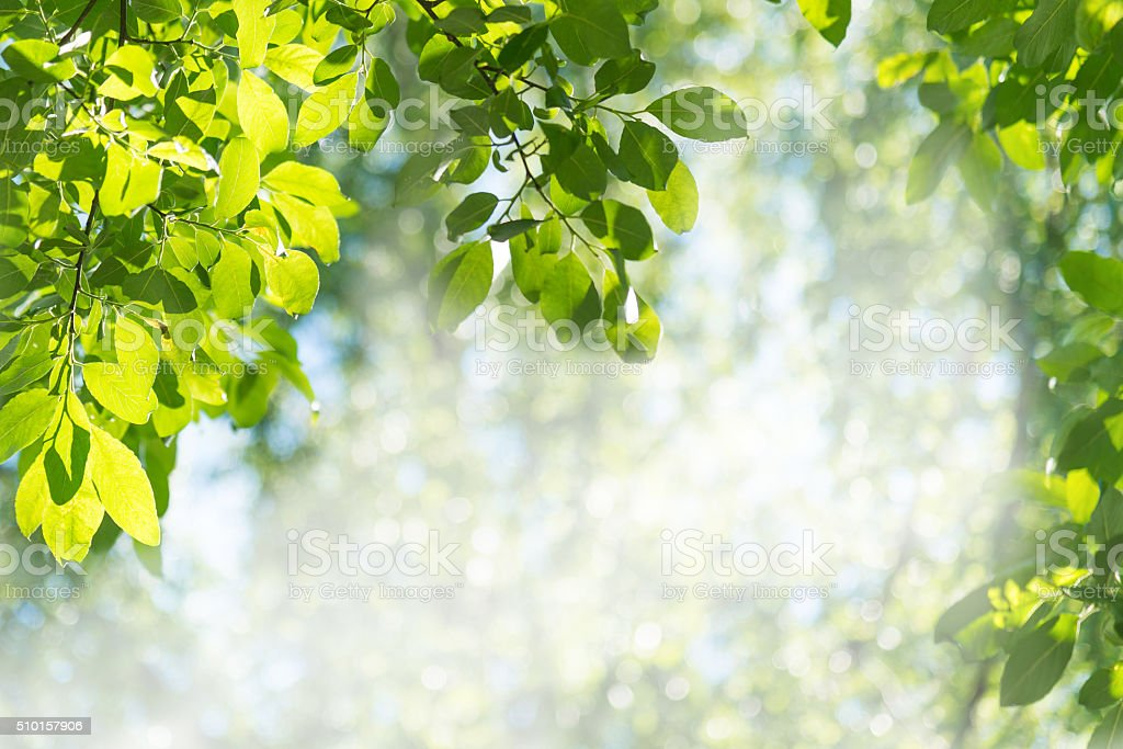Green leaves against the forest stock photo