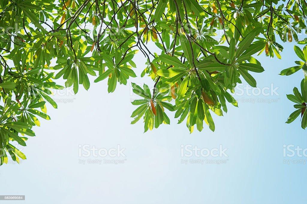 green leaves against the light blue sky stock photo