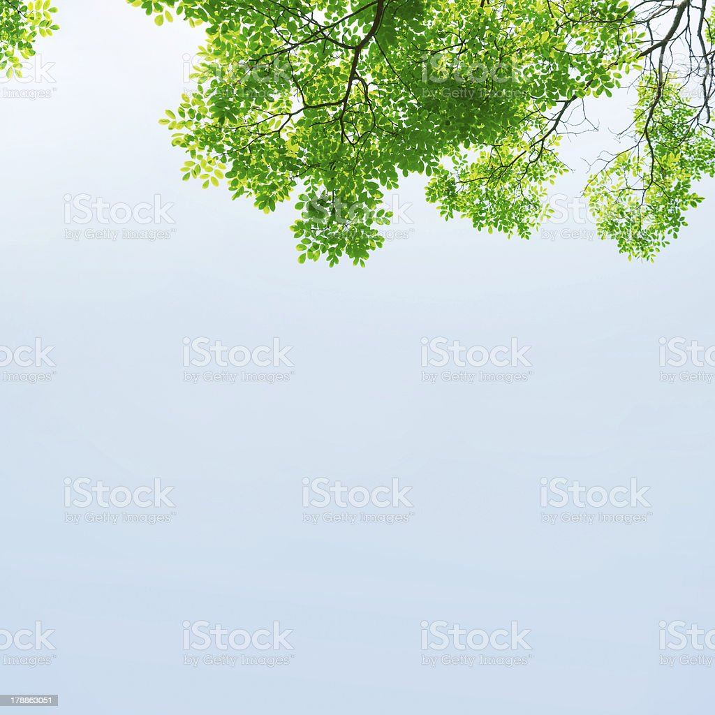 Green leaves against the sky royalty-free stock photo