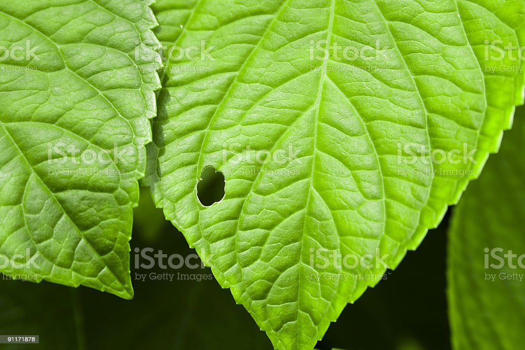 Green leaves and hole stock photo