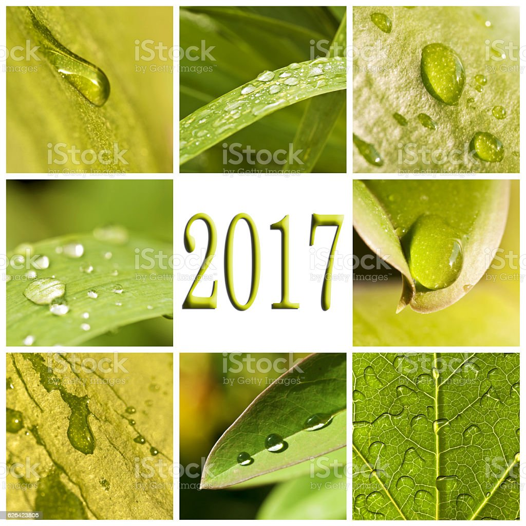 2017, green leaves and raindrops photo collage stock photo