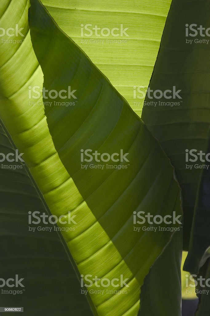 Green Leaves and Shadows royalty-free stock photo