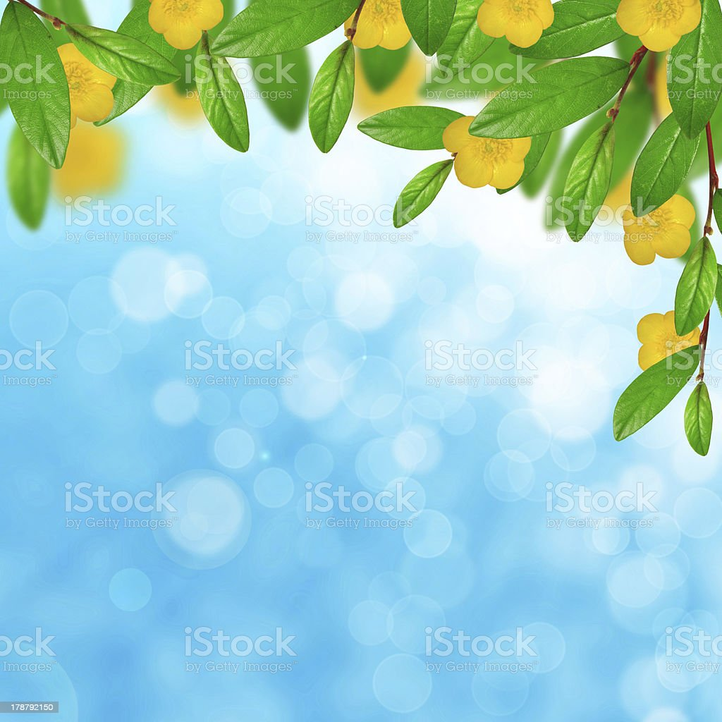 Green leaves and yellow flowers on the sky background royalty-free stock photo