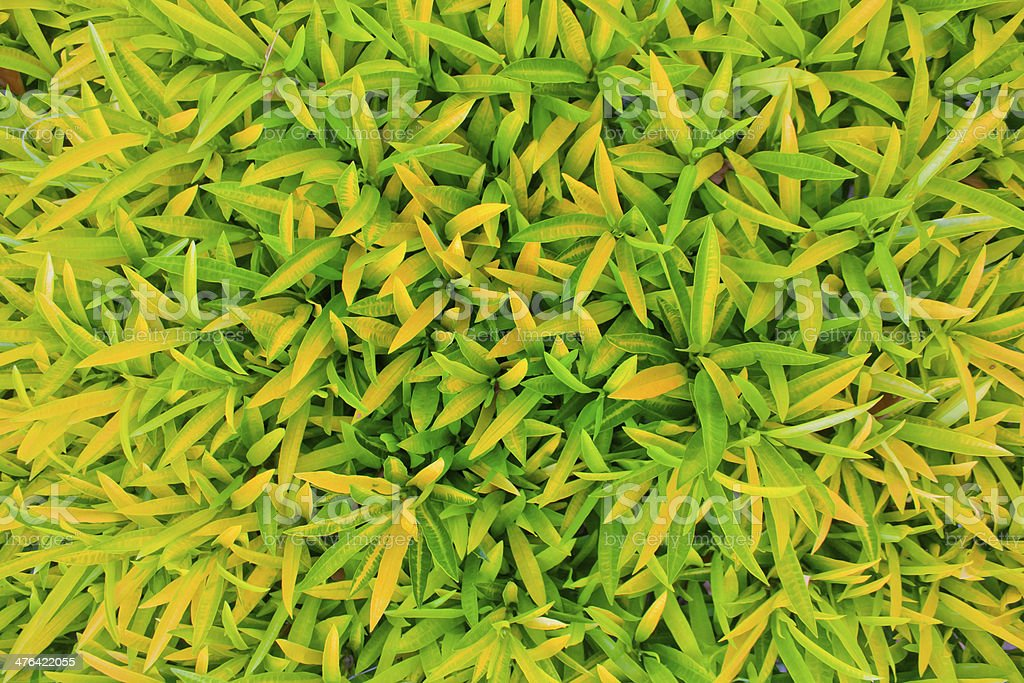 Green leaves background. royalty-free stock photo