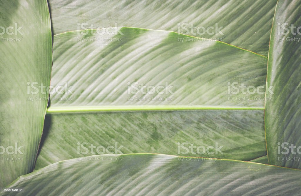 Green leaves background. stock photo
