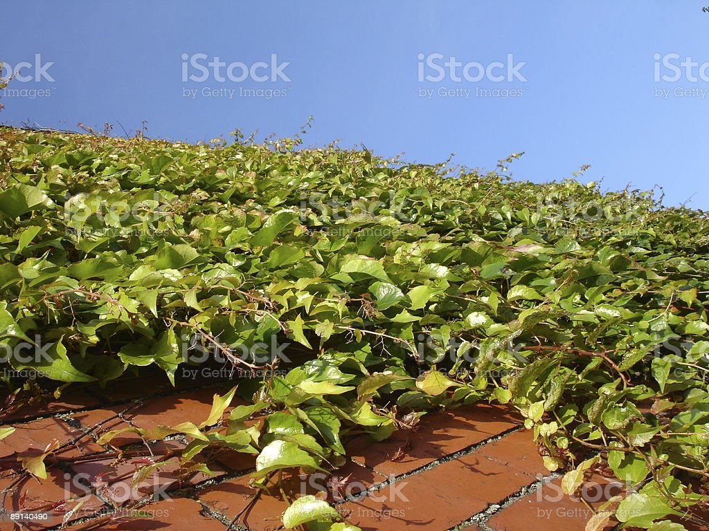 Green leaves, blue sky and wall stock photo