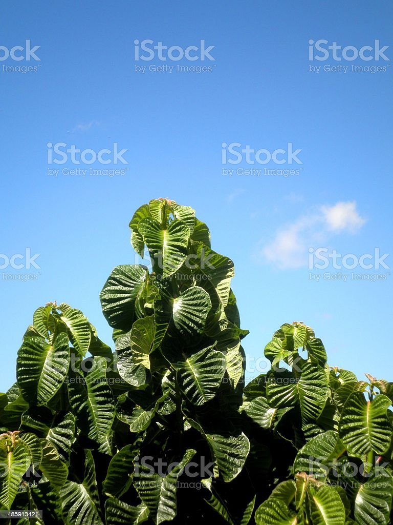 Green Leaves Blue Sky royalty-free stock photo