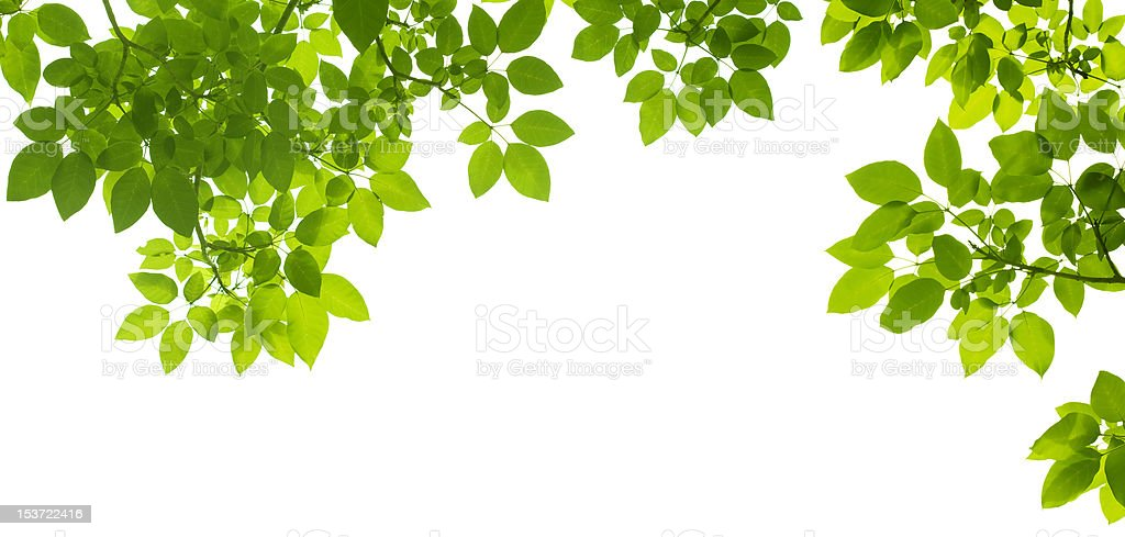 Green Leaves border royalty-free stock photo