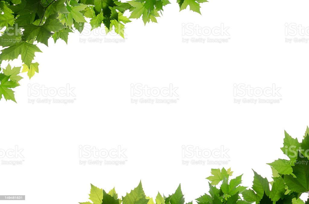 Green leaves bordering corners of white background royalty-free stock photo