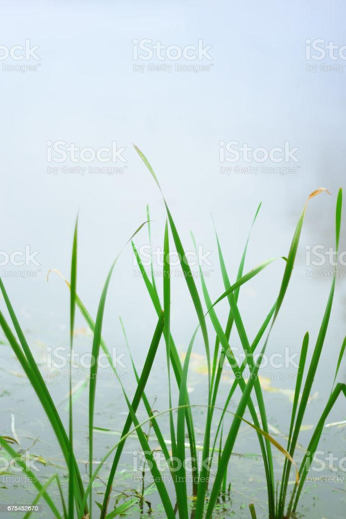 Green Leaves Closeup stock photo