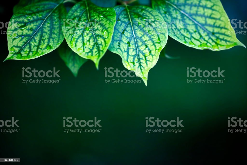 Green leaves close-up (with copyspace) stock photo