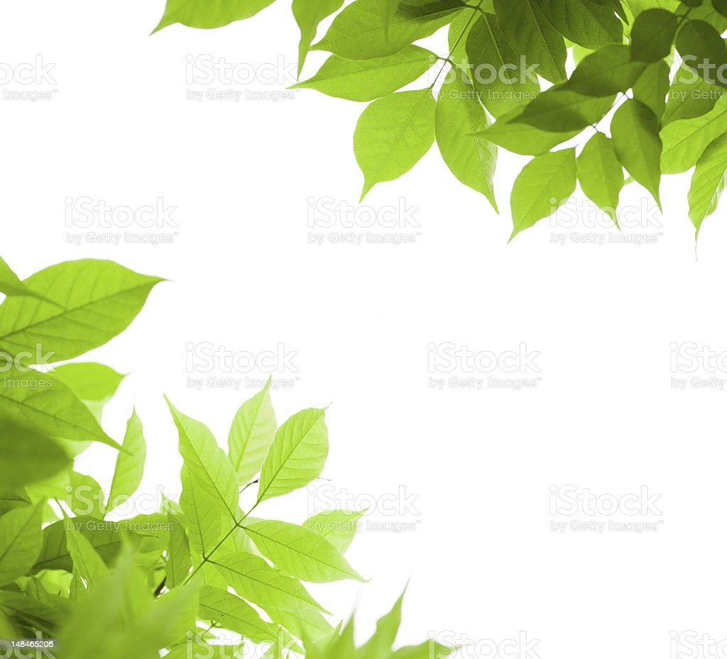green leaves, decorative border stock photo