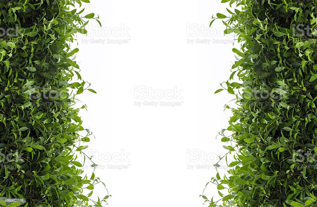 Green leaves frame isolated on white background stock photo