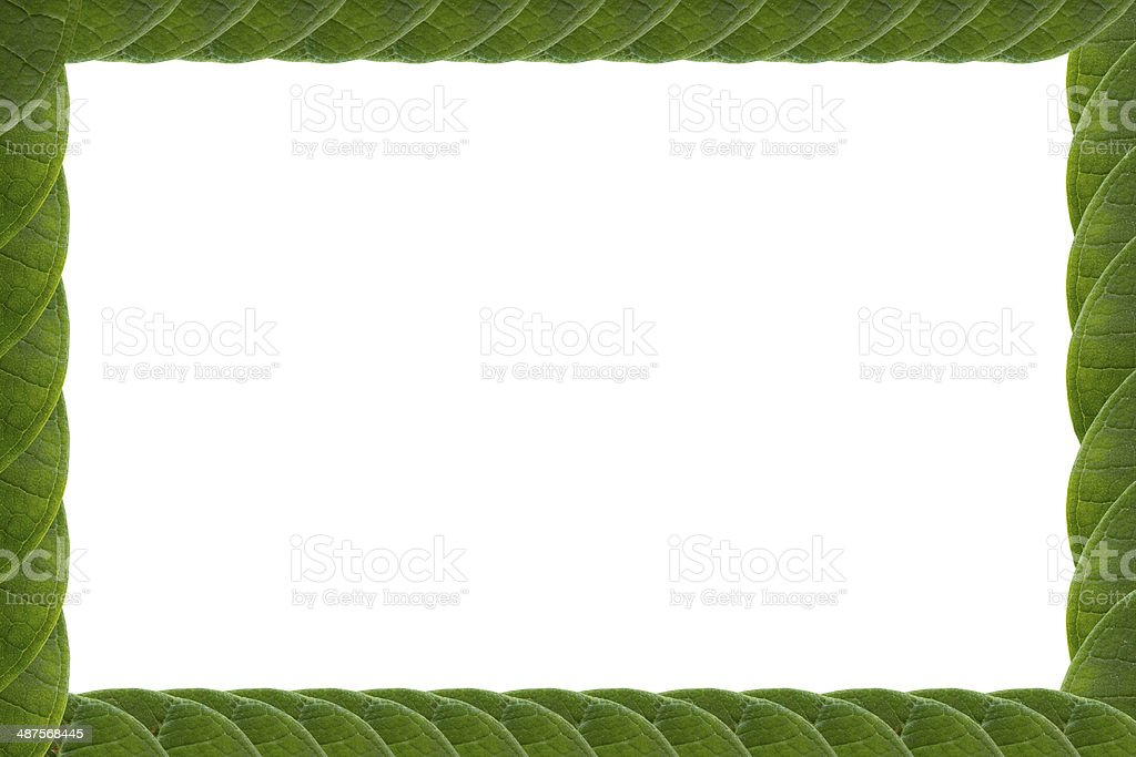 Green leaves frame isolated on white background.#1 stock photo