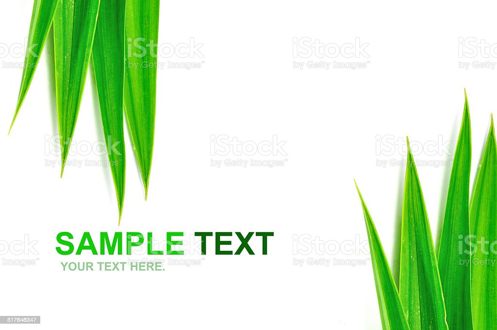 Green leaves frame isolated stock photo