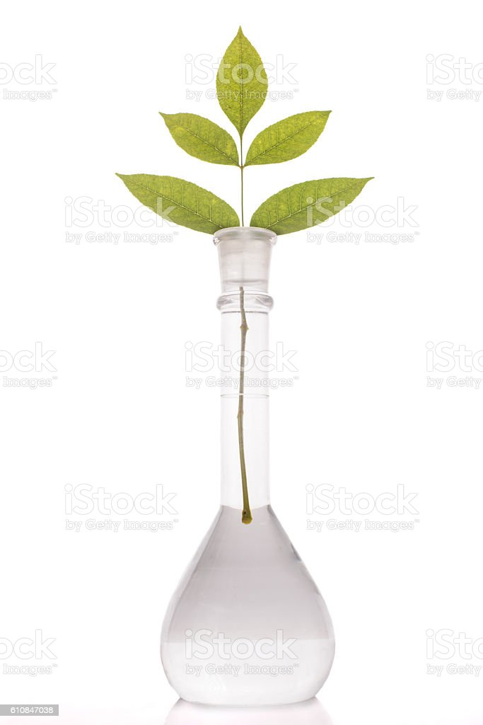Green leaves in flask with a liquid on white background stock photo