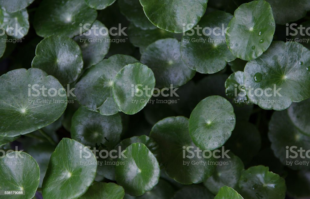 Green leaves in natural light and shadow stock photo