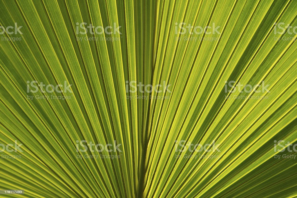 green leaves in nature royalty-free stock photo