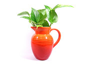 Green leaves in red vase isolated on white background