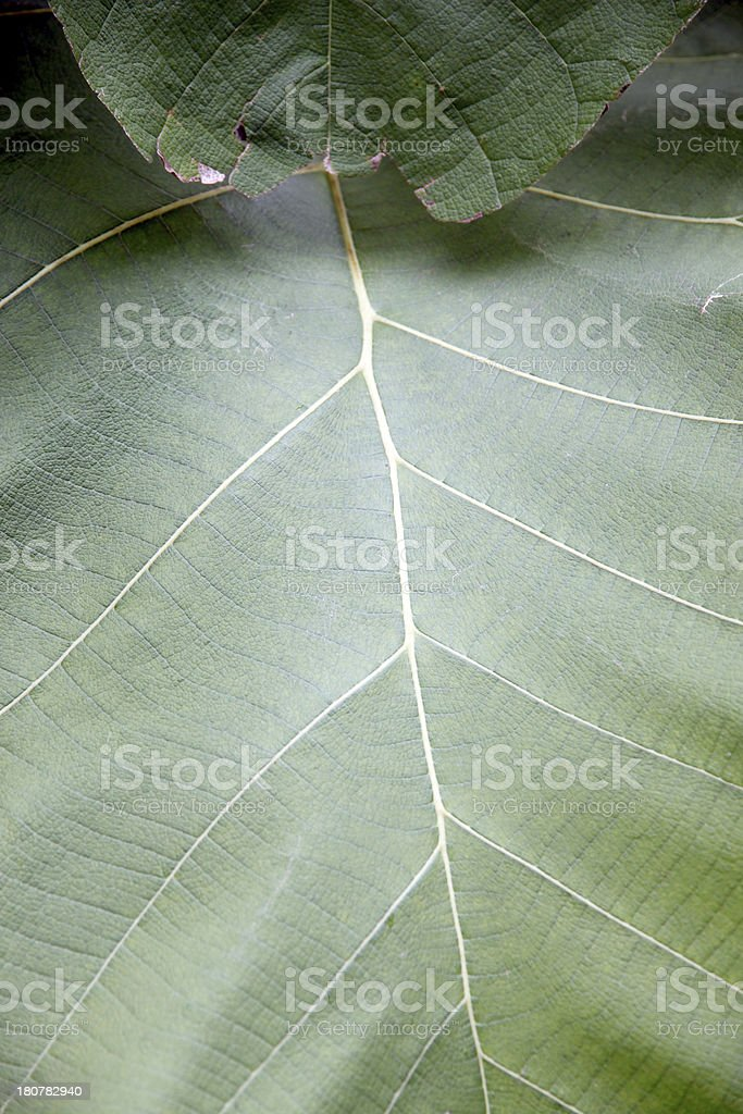 Green leaves in the backyard. stock photo