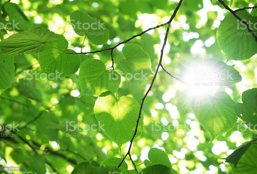 Green leaves in the forest stock photo