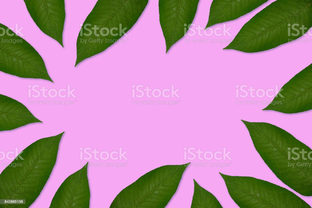 Green leaves isolated stock photo