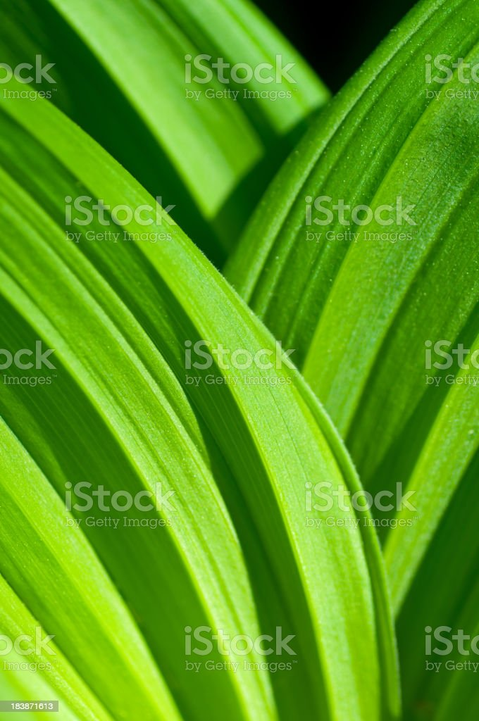 Green Leaves layer royalty-free stock photo