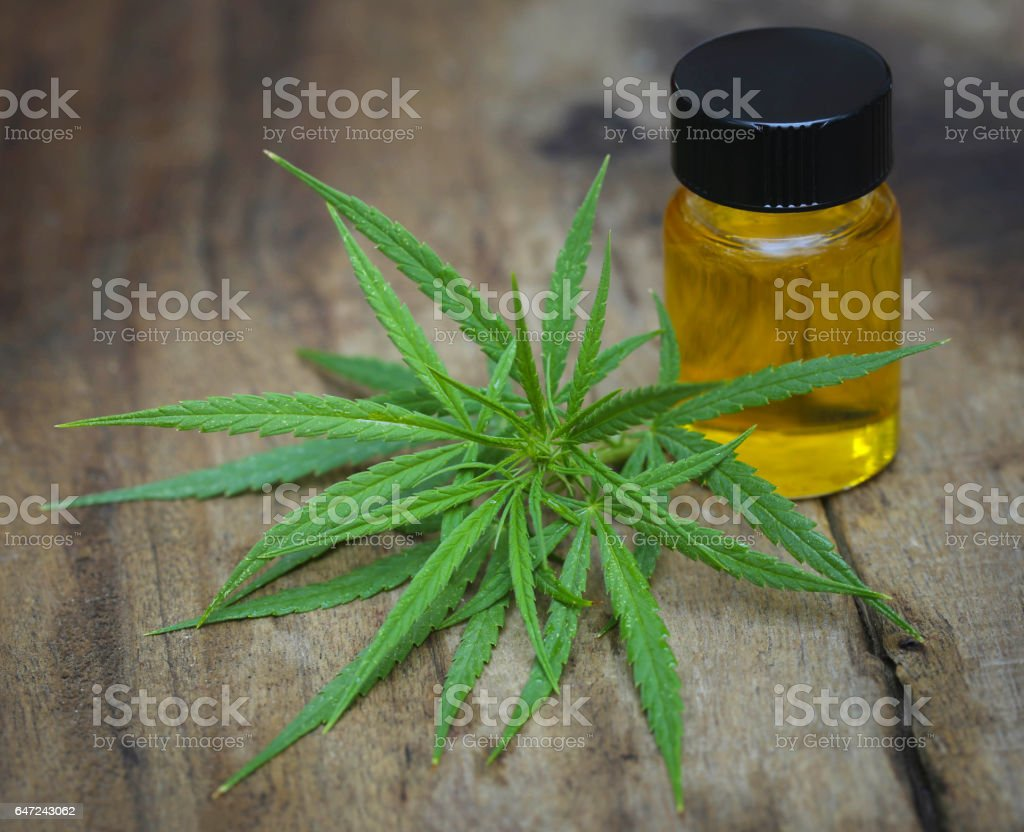Green leaves of medicinal cannabis with extract oil stock photo