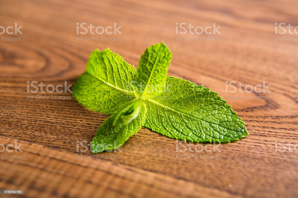 Green leaves of mint. stock photo