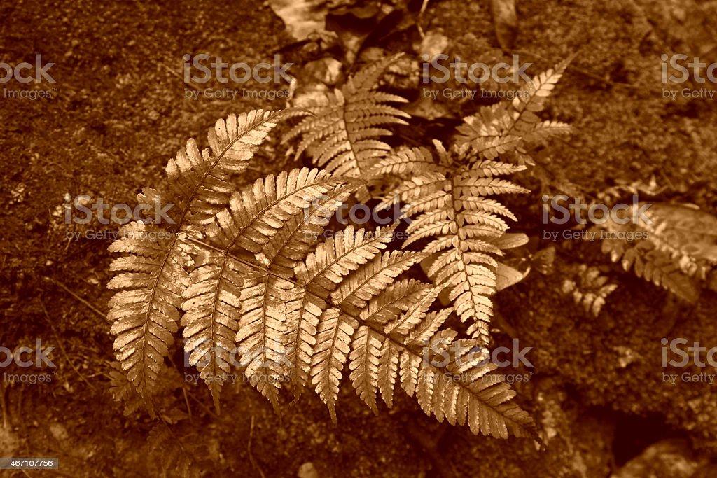 green leaves of plants in Zhangjiajie National Geological Park stock photo