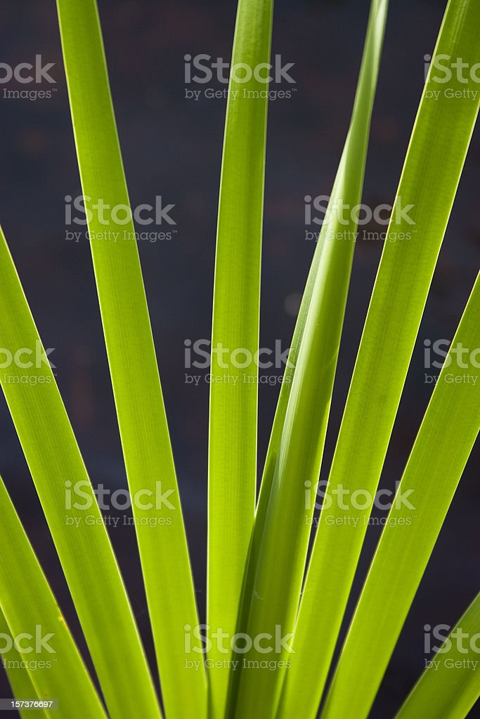 green leaves of sedge cane stock photo