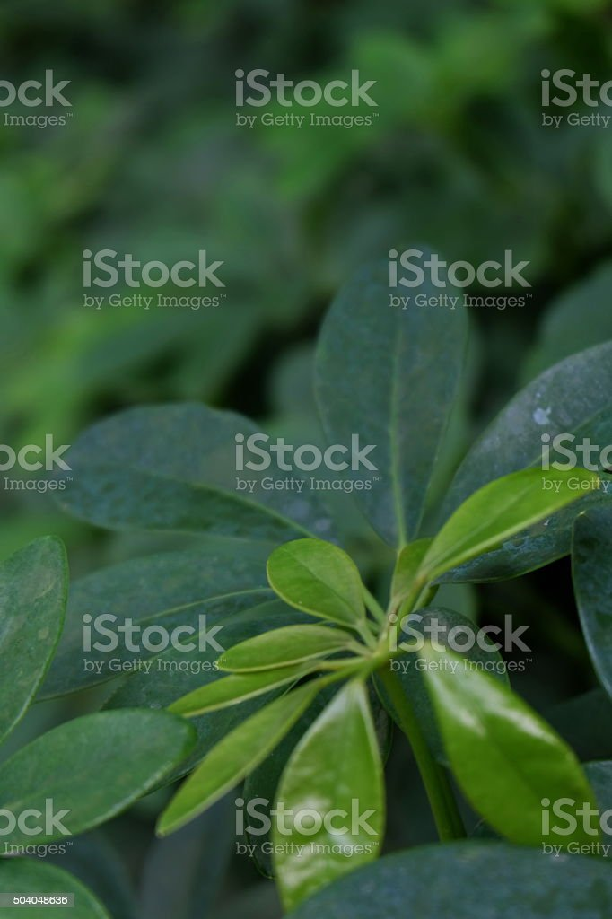 green leaves of the tree10 stock photo