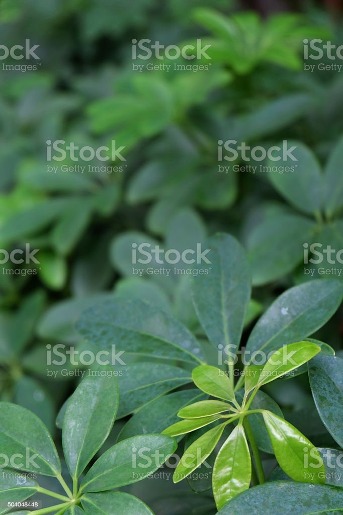 green leaves of the tree11 stock photo