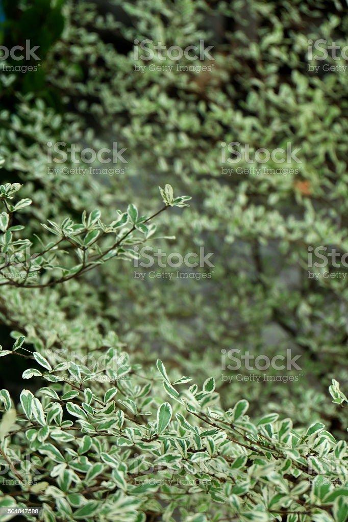 green leaves of the tree17 stock photo