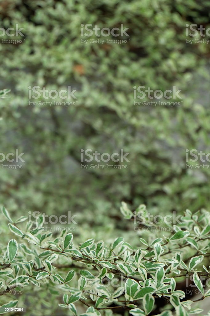 green leaves of the tree18 stock photo