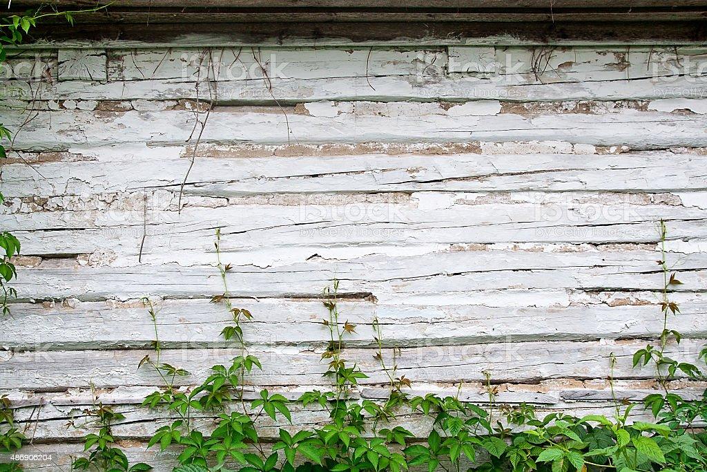Hojas de la naturaleza Verde sobre fondo de madera vintage uvas foto de stock libre de derechos